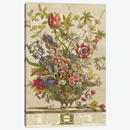 February, from `Twelve Months of Flowers' by Robert Furber  Canvas Print #BMN369} by Pieter Casteels Canvas Print