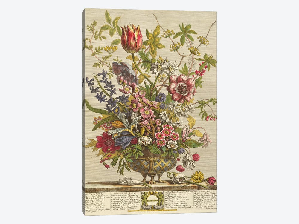 February, from `Twelve Months of Flowers' by Robert Furber  by Pieter Casteels 1-piece Canvas Artwork