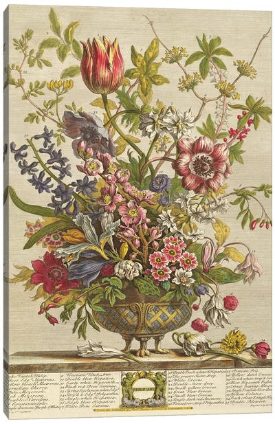 February, from `Twelve Months of Flowers' by Robert Furber  Canvas Art Print