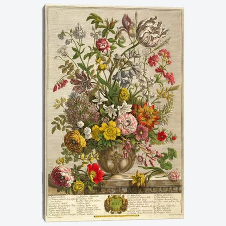 May, from 'Twelve Months of Flowers' by Robert Furber  Canvas Print #BMN370} by Pieter Casteels Canvas Artwork