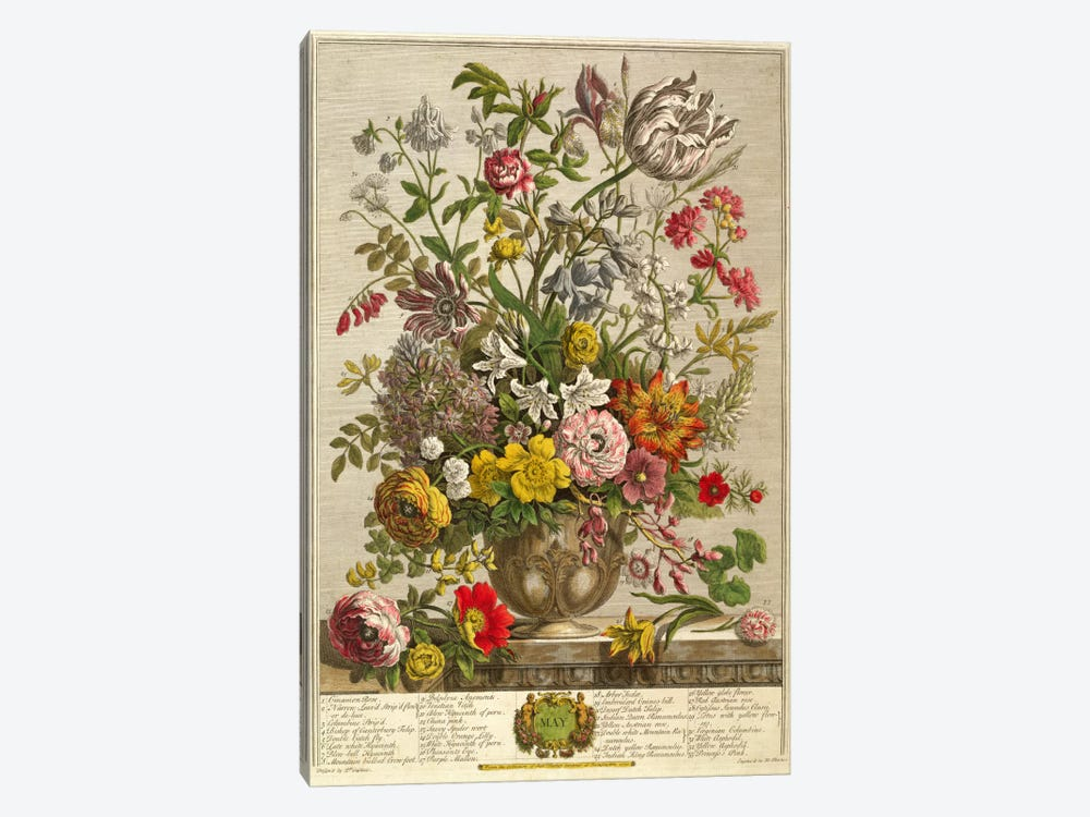 May, from 'Twelve Months of Flowers' by Robert Furber by Pieter Casteels 1-piece Canvas Art
