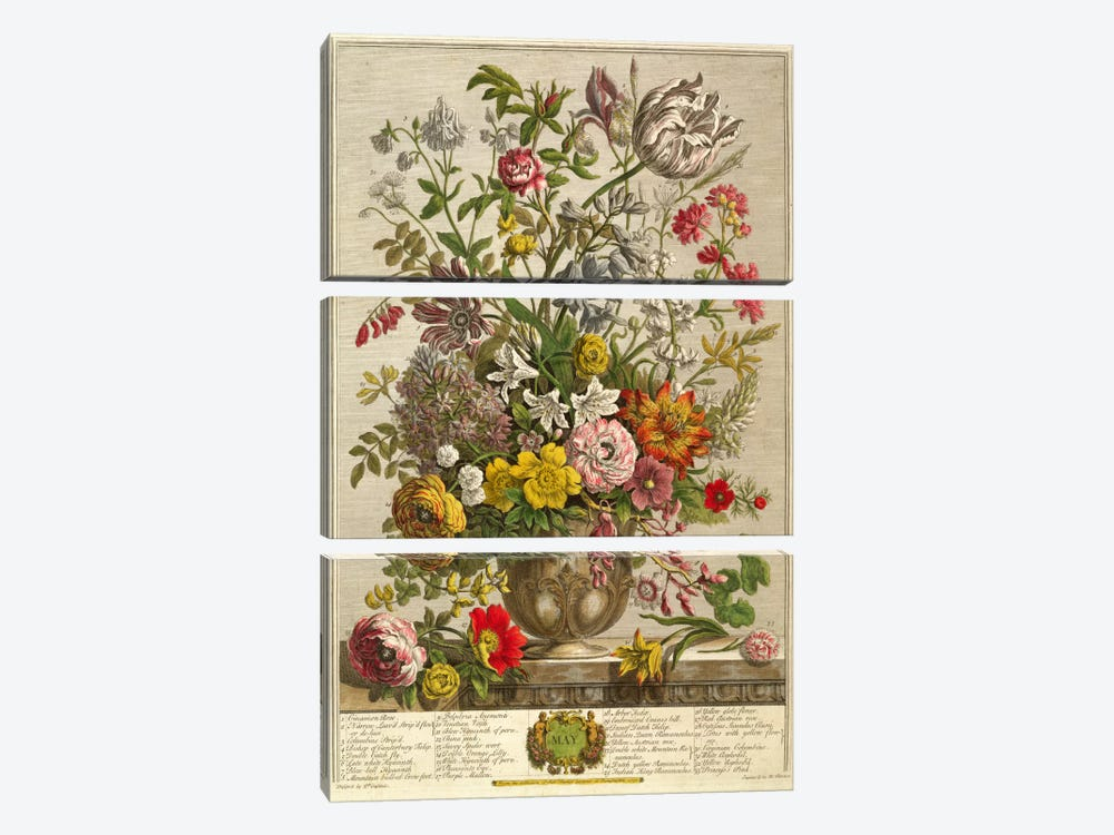 May, from 'Twelve Months of Flowers' by Robert Furber  by Pieter Casteels 3-piece Canvas Wall Art