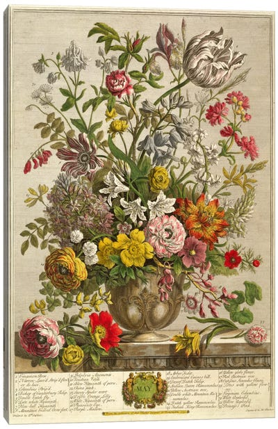May, from 'Twelve Months of Flowers' by Robert Furber  Canvas Art Print