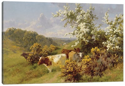 May Blossom  Canvas Art Print