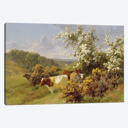 May Blossom  Canvas Print #BMN3727} by Charles Collins Art Print