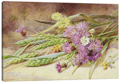Green Wheat and Wild Flowers  Canvas Art Print