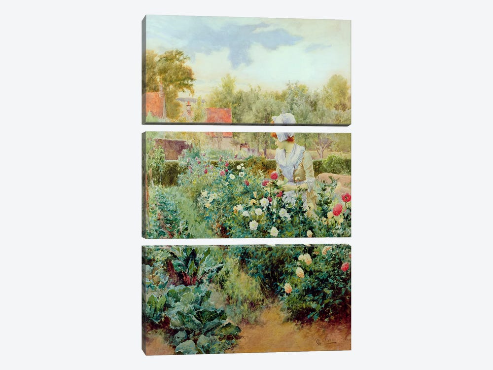 Dahlias, 1896  by Alfred Glendening 3-piece Canvas Artwork