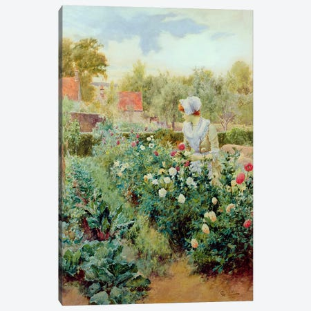 Dahlias, 1896  Canvas Print #BMN3742} by Alfred Glendening Canvas Art