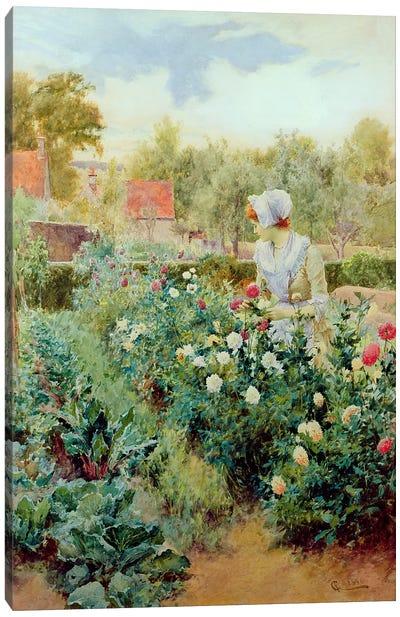 Dahlias, 1896  Canvas Art Print