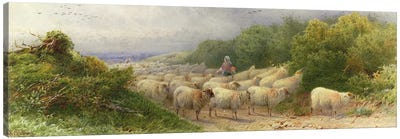 Sheep on the Downs  Canvas Art Print