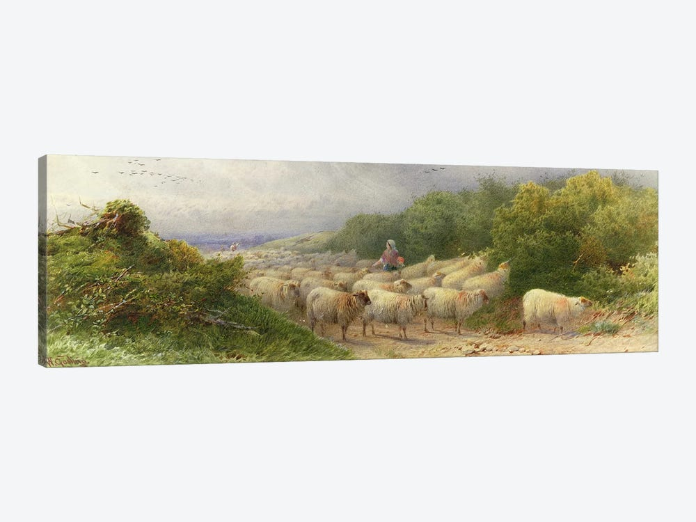 Sheep on the Downs  by William W. Gosling 1-piece Art Print