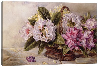 Rhododendrons  Canvas Art Print