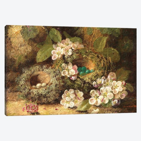 Primroses and Bird's Nests on a Mossy Bank, 1882  Canvas Print #BMN3809} by Oliver Clare Art Print