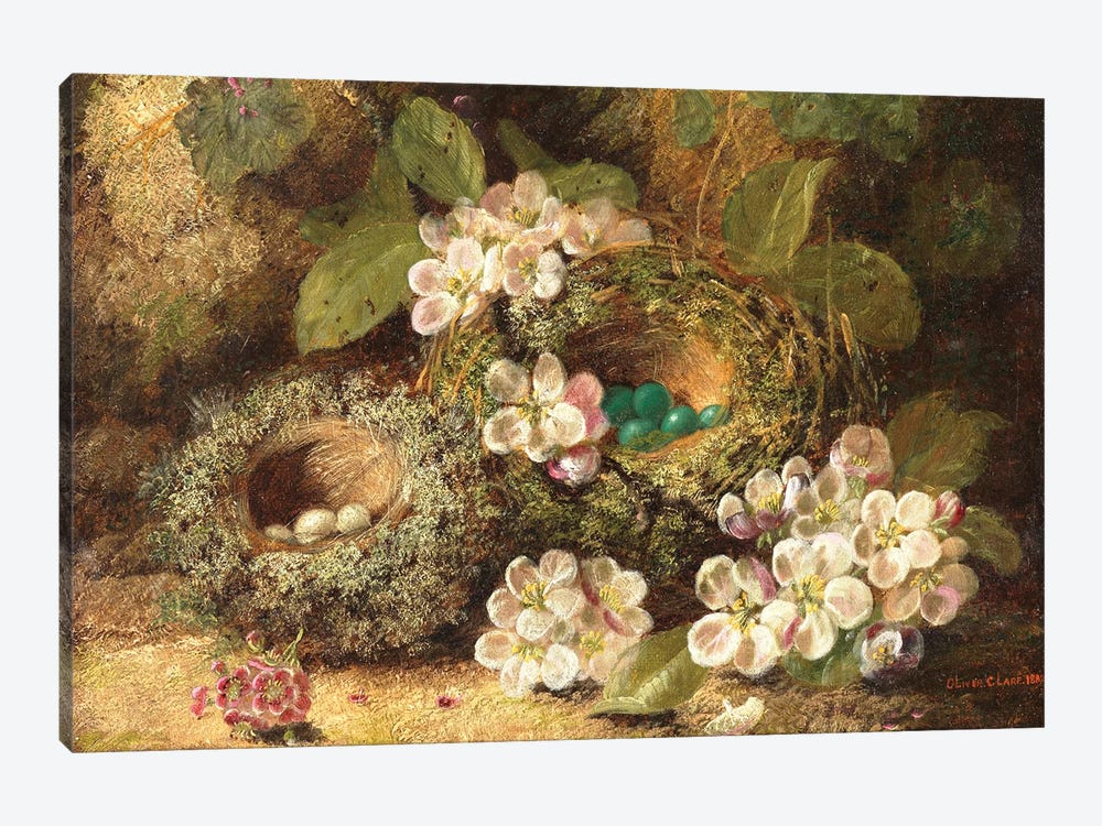 Primroses and Bird's Nests on a Mossy Bank, 1882  by Oliver Clare 1-piece Canvas Art Print