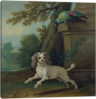 Zaza, the dog, c.1730  Canvas Art Print