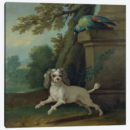 Zaza, the dog, c.1730  Canvas Print #BMN3814} by Jean-Baptiste Oudry Canvas Print