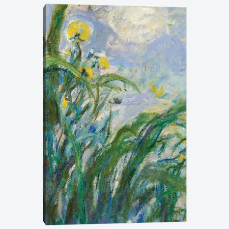 The Yellow Iris  Canvas Print #BMN3865} by Claude Monet Canvas Artwork