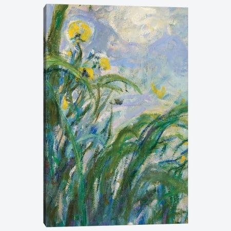 The Yellow Iris  Canvas Print #BMN3865} by Claude Monet Canvas Artwork