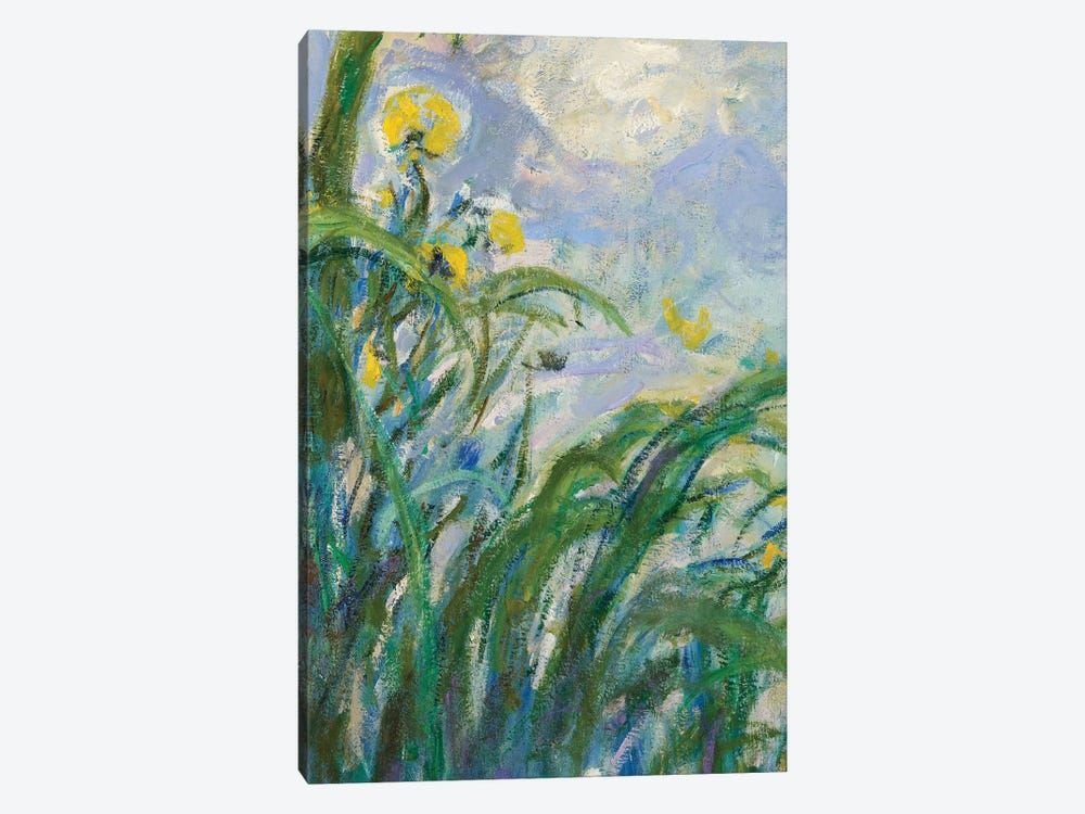 The Yellow Iris  by Claude Monet 1-piece Canvas Art Print