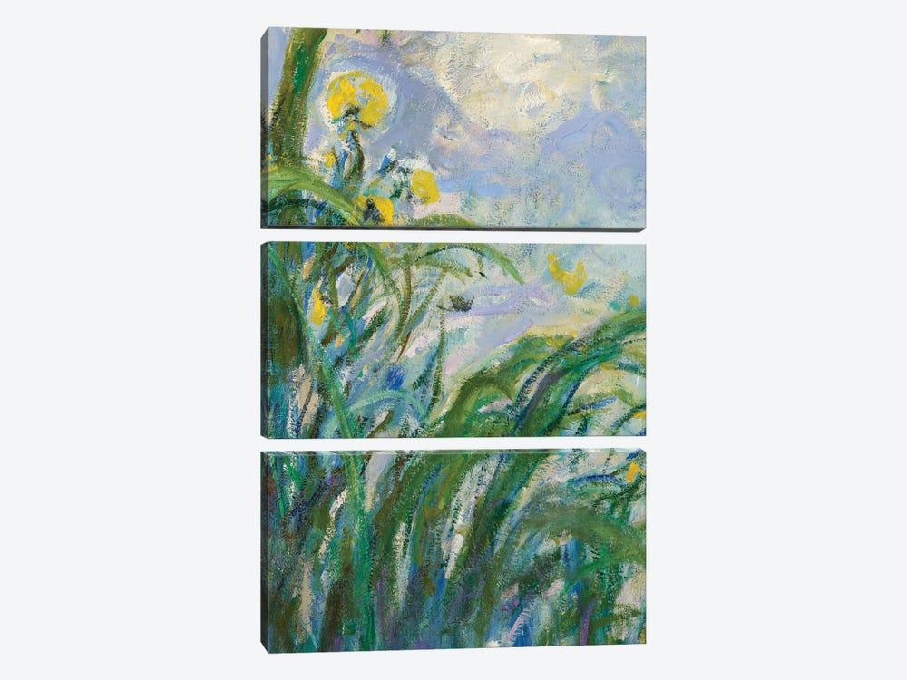 The Yellow Iris  by Claude Monet 3-piece Canvas Print