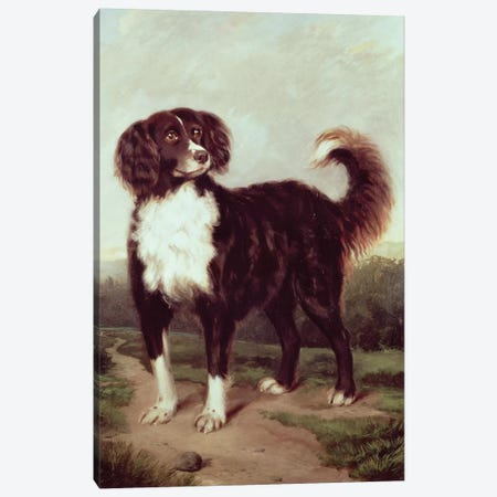 Spaniel Canvas Print #BMN392} by J.W. Morris Canvas Art