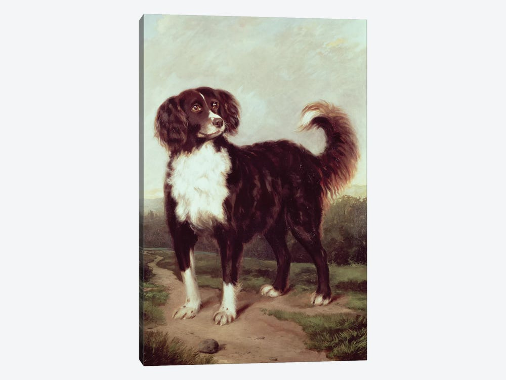 Spaniel by J.W. Morris 1-piece Canvas Wall Art