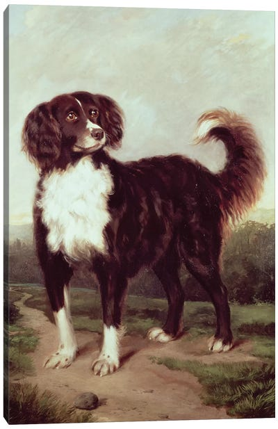 Spaniel Canvas Art Print