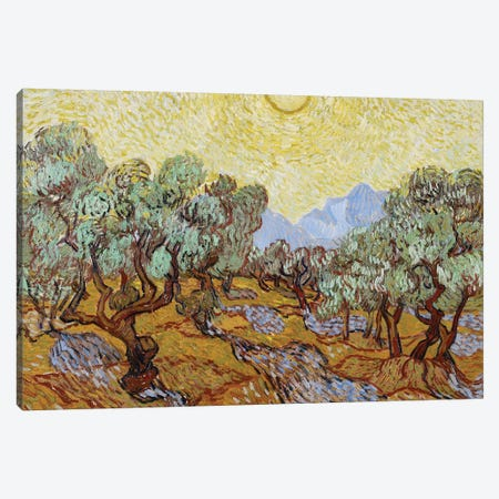 Olive Trees, 1889  Canvas Print #BMN3965} by Vincent van Gogh Art Print