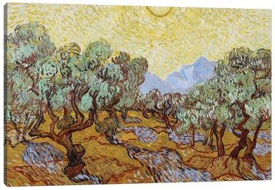 Olive Trees, 1889  Canvas Art Print