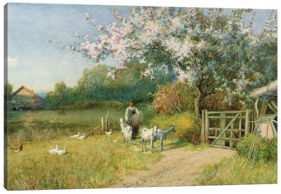 Springtime Canvas Art Print