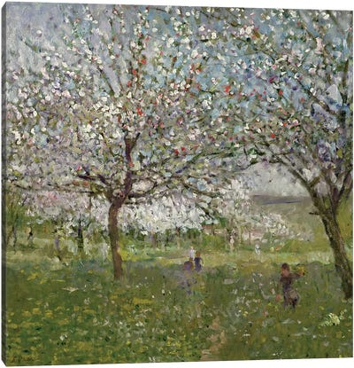 Apple Trees in Flower Canvas Art Print