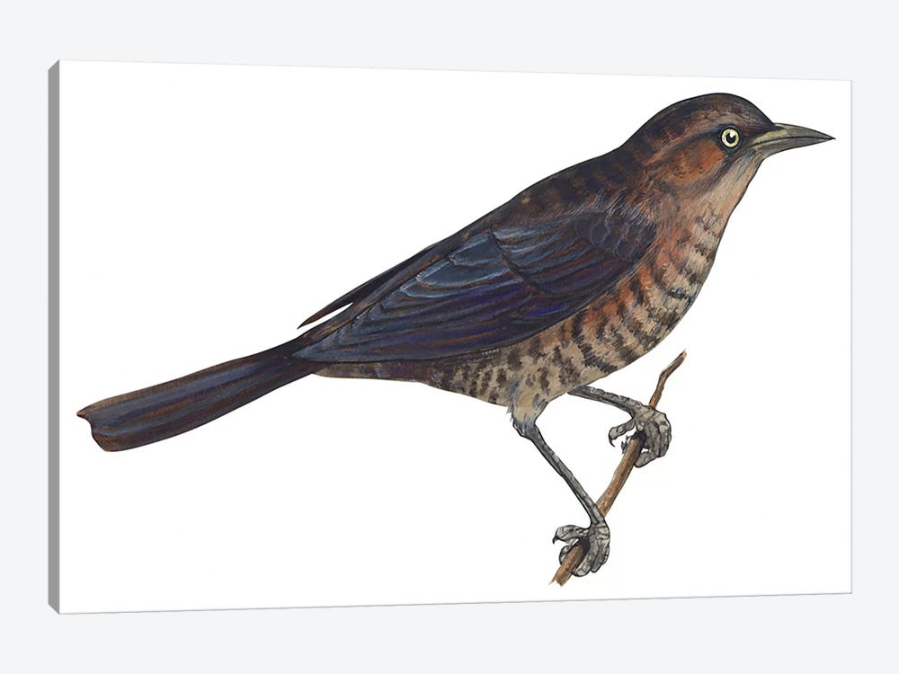 Rusty blackbird 1-piece Art Print