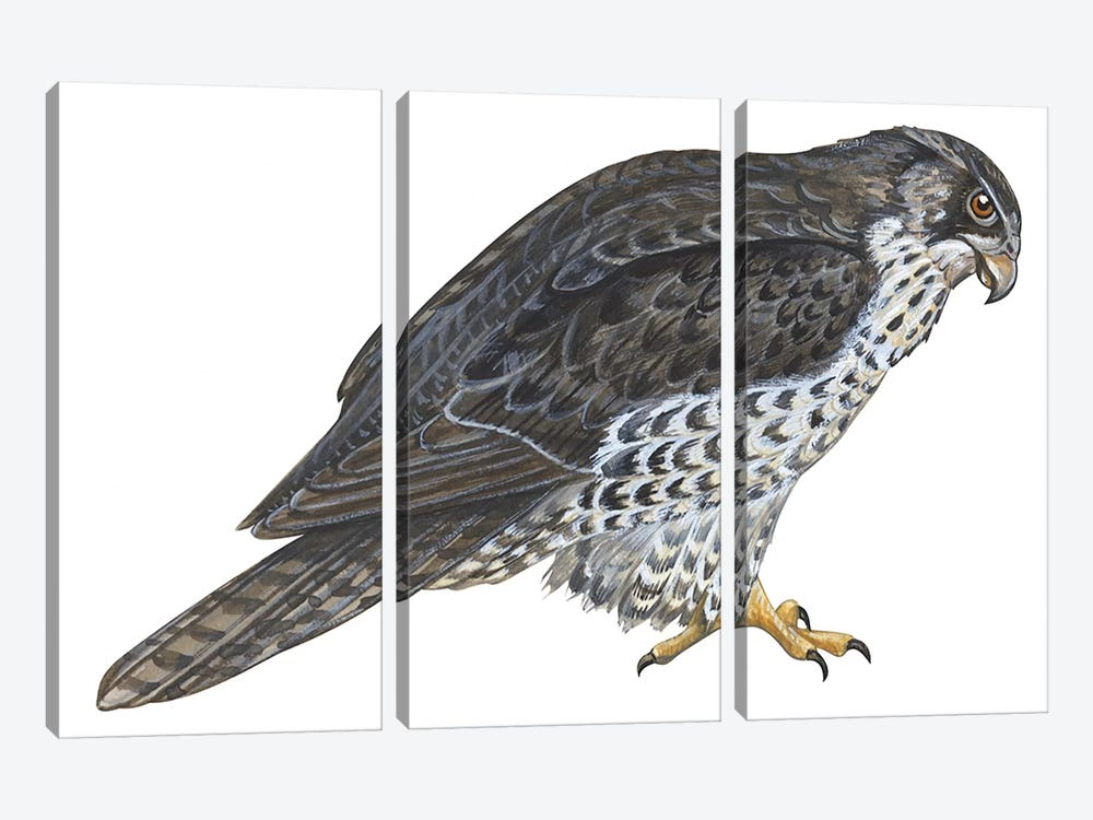 Falcon by Unknown Artist 3-piece Canvas Wall Art