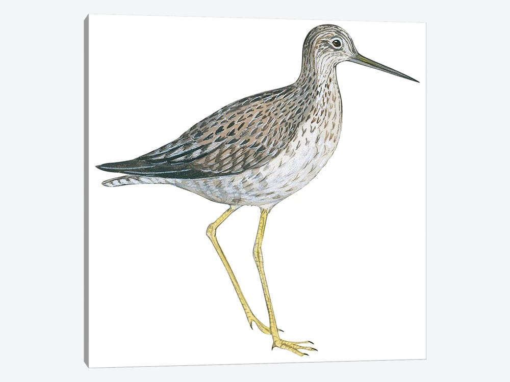 Greater yellowlegs 1-piece Canvas Print
