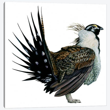 Sage grouse Canvas Print #BMN4063} by Unknown Artist Canvas Art