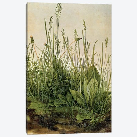 The Great Piece of Turf, 1503  Canvas Print #BMN4092} by Albrecht Dürer Canvas Print
