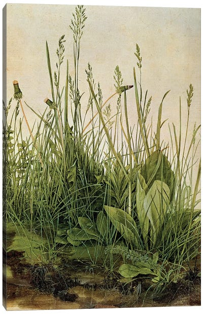 The Great Piece of Turf, 1503  Canvas Art Print