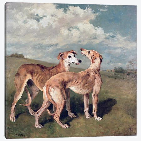 Greyhounds  Canvas Print #BMN409} by John Emms Canvas Artwork