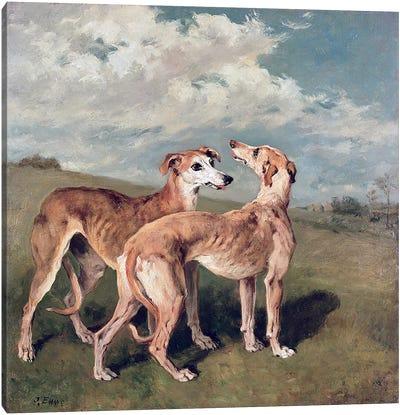 Greyhounds  Canvas Print #BMN409