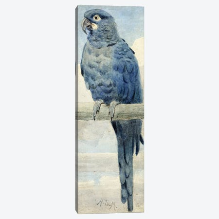 Hyacinthine Macaw, 1889  Canvas Print #BMN4120} by Henry Stacey Marks Canvas Print