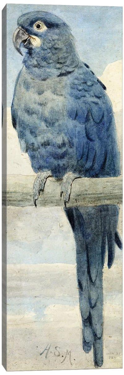 Hyacinthine Macaw, 1889  Canvas Art Print