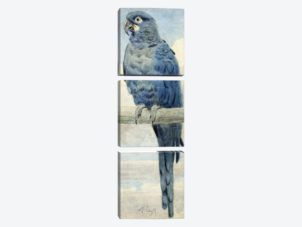 Hyacinthine Macaw, 1889  by Henry Stacey Marks 3-piece Canvas Artwork
