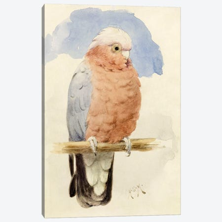 A Rose Breasted Cockatoo, c.1890  Canvas Print #BMN4121} by Henry Stacey Marks Canvas Art Print