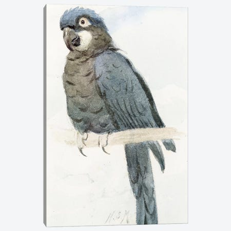 Hyacinth Macaw, c.1890  Canvas Print #BMN4122} by Henry Stacey Marks Canvas Print