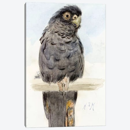 A Black Cockatoo, c.1890  Canvas Print #BMN4123} by Henry Stacey Marks Canvas Art Print