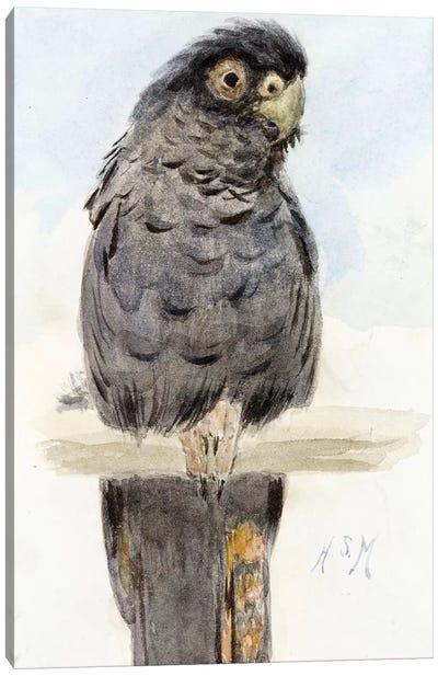 A Black Cockatoo, c.1890  Canvas Art Print