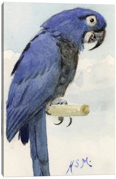 Hyacinth Macaw, c.1890  Canvas Art Print