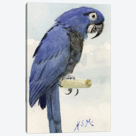 Hyacinth Macaw, c.1890  Canvas Print #BMN4124} by Henry Stacey Marks Canvas Artwork