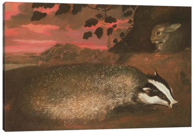 Badger, 17th century Canvas Art Print