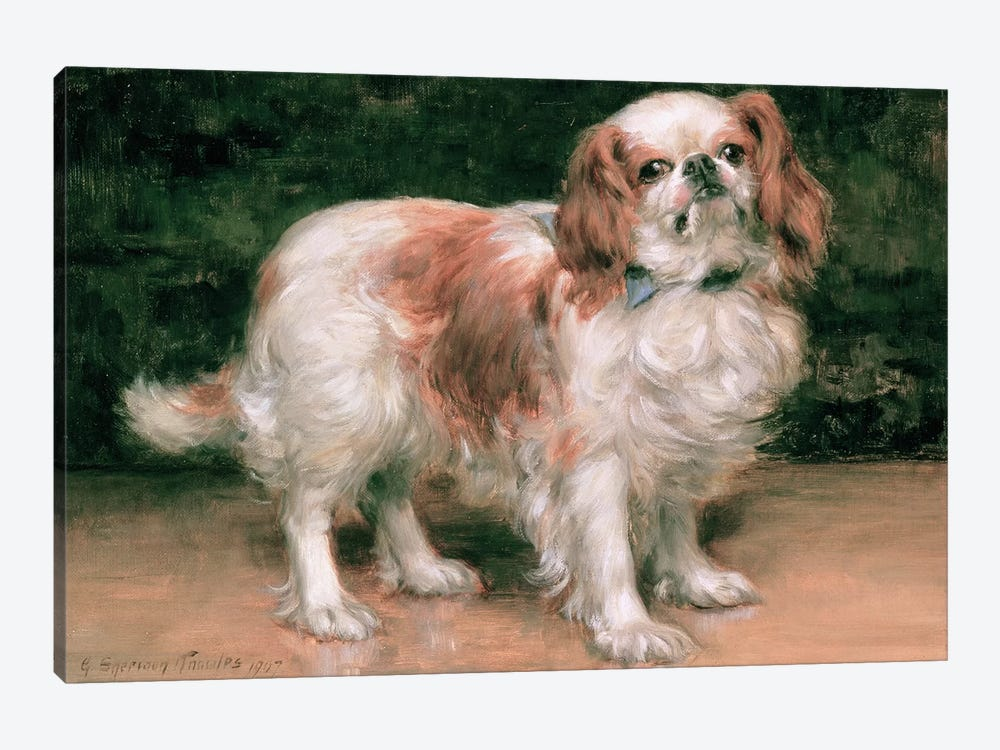 King Charles Spaniel, 1907 by George Sheridan Knowles 1-piece Canvas Artwork